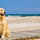 Friendly beaches for animals in Italy